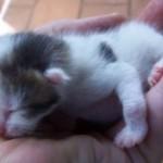 Sisel Kätzchen überlebt durch Terminator Hilfe