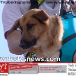Tag der Helfer Wiesloch 2014 TVueberregional Wiwa Lokal (16)