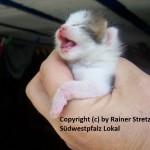 Sisel Babykatze Tag Nummer 09