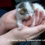 Sisel Katzenbaby 10