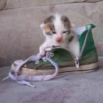 Sisel das Katzenbaby 12