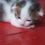 Sisel Katzenbaby 13