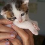 Sisel die Babykatze 14