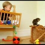 Alles über Katzen Teil 01