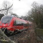 Private Baumfällarbeiten legt Zugverkehr lahm