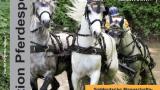 Fahrturnier 2015 Reiterverein Reilingen – Faszination Pferdesport