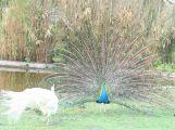 Ostermontag Ostereier suchen im Vogelpark Waghäusel