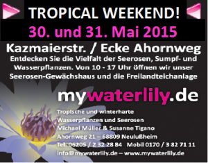 30 - 31 mai mywaterlily