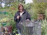 Tag der offenen Tür bei der Wasserpflanzen Spezialgärtnerei in Neulußheim