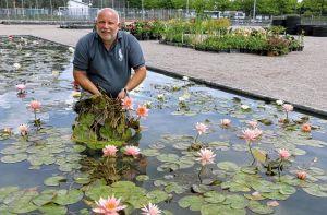 Tropical Weekend - Garten und Teich - Seerosen und Pflanzen in Neulußheim am 30 - 5- und 31 - 5 2015