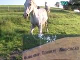 Ein Gnadenhof für Tiere im Kraichgau – Film 02