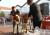 St. Leon – Rot – 38. Roter Straßenkerwe vom 01.10. – 02.10.2016 – absoluter Ausnahmezustand