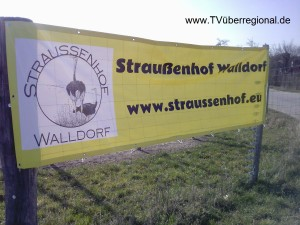 Straussenfarm - Straussenspezialitäten - Strausseneier - Straussenfleisch neukundengewinnen neukundenwerbung neukundenonlinewerbung neukundenvideoproduktion onlinewerbung tvüberregional