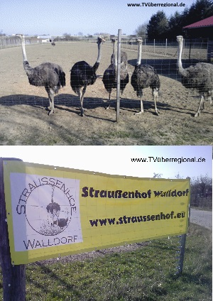 Straussenhof tvueberregional 3 sekunden 300x425