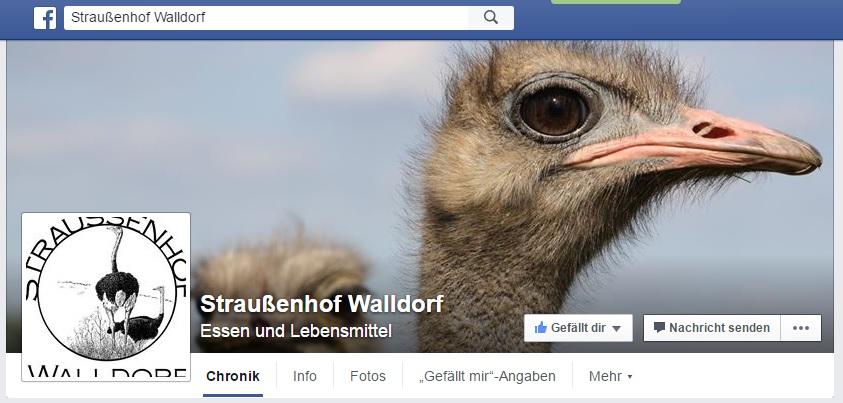 straussenhof walldorf straussenfarm walldorf facebook straussenhof - tvüberregional