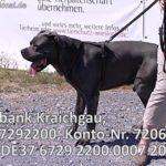 TOM TATZE TV – Film 01 – Tierheim Tom Tatze in Walldorf zeigt Ihnen einen schönen, lieben Hund der ein NEUES ZUHAUSE sucht