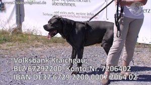 TOM TATZE TV - Film 01 - Tierheim Tom Tatze in Walldorf zeigt Ihnen einen schönen, lieben Hund der ein NEUES ZUHAUSE sucht
