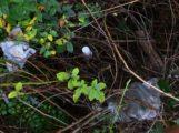 HOCKENHEIM – Hinweisschilder sollen Streuobstwiese vor Abfall schützen