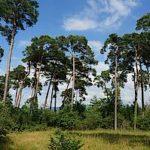 Großer Waldtag 2016