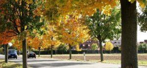 NEUIGKEITEN aus dem schönen REILINGEN - Reilingen im Herbst