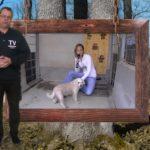 Walldorf – Tom Tatze Tierheim Weihnachten – Tierschutz Wiesloch