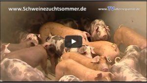 Schweinezuchtbetrieb Sommer Sommerhof in Dielheim Kraichgau