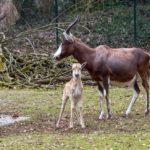 """Der """"Mutter-Kind-Tag"""" im Heidelberger Zoo!"""