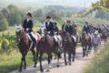 MALSCH –Pferdewallfahrt auf den Letzenberg – ERLEBNIS für jung und alt – PFERDEFREUNDE und NATURLIEBHABER am 24.09.2017