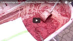Lokalreportage Wiesloch, Rauenberg, Reilingen - TVüberregional