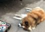 Hund stirbt in Fahrzeug bei hochsommerlichen Temperaturen