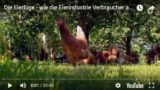 Die Eierlüge – wie die Eierindustrie Verbraucher austrickst