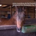 Rosinantes Paradies für Pferde in Not e.V., Rauenberg, Vereine