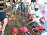 Hockenheim, Bauernhofbesuch, Abschlussfest, 2018-07-27, Verwaltung Südstadtkindergarten
