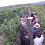 Weinkontor, Edenkoben, Tag der offenen Tür
