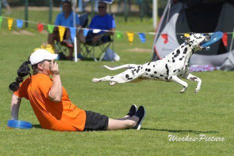 Hundefrisbee-Event beim Sporthundeverein Kirrlach am 27.07.2019