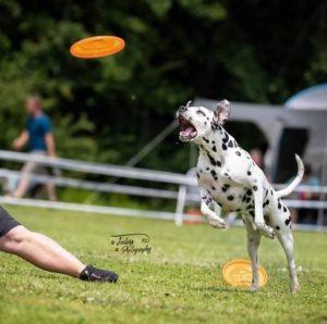 Hundefrisbee-Event beim Sporthundeverein Kirrlach. (c) Copyright by www.feeling-photography.ch Fotograf für PR, Events, Öffentlichkeitsarbeit, Veranstaltungen und mehr