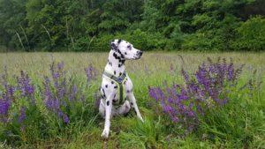 Sandra Lettang, Hundesportverein Waghäusel - Kirrlach 01