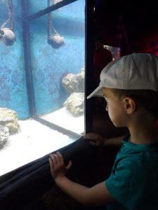 """Sea-Life Spyer, Abschluss der Vorschüler vom Haus der kleinen Hasen Bald ist es soweit und die Vorschüler vom """"Haus der kleinen Hasen"""" kommen in die Schule."""