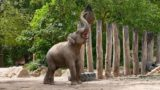 Heidelberg, keine Langeweile, wie beschäftigt man Zootiere? Zooschule bietet Workshop für Erwachsene.