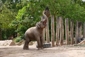 Keine Langeweile, wie beschäftigt man Zootiere. Zooschule bietet Workshop für Erwachsene.