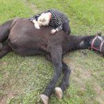 Heidelberg-Pfaffengrund: Pferd auf Koppel verletzt aufgefunden – Zeugen gesucht!