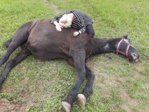 Nach Hinzuziehung eines Tierarztes musste die 33-Jahre alte Stute eingeschläfert werden.