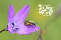 Online-Vortrag gibt Tipps über Wildbienen in Hockenheim